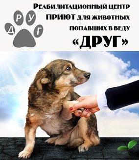 Общество защиты животных Друг